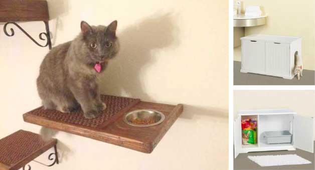 cat-eating-shelf
